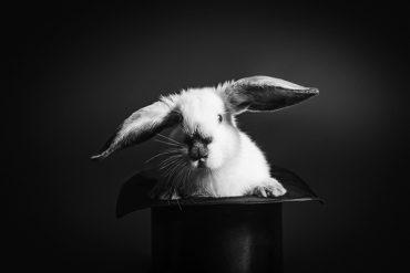 RabbitHat_HeyPorter.com